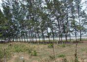 Terreno en el bayo frente a laguna