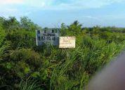 Vendo terreno rustico sobre carretera federal chicxulub  puerto  san bruno