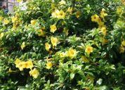 Plantas de ornato y jardineria
