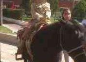 Ponyes para fiestas infantiles y toro mecanico