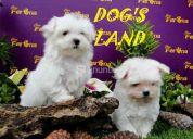 !!!!cachorros para departamento  y niÑos!!!!!