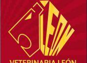 Veterinaria leon a domicilio