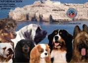 Cachorros varias razas