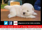Gran venta de cachorros todas las razas disponibles  garantizados x escrito
