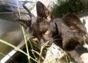 Adopcion 2 gatitos 1 mes