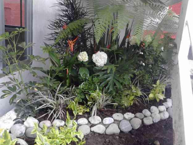 Jardineria jardineros xochimilco xochimilco la asuncion for Jardineria xochimilco
