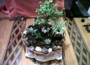 Macetas decorativas con cactus