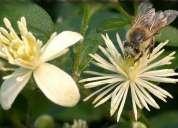 Flores bach monterrey méxico