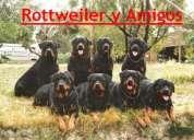 Rottweilers y amigos!