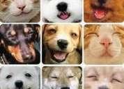 Estilista canino
