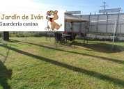 guarderia pension canina en puebla