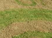 Pintura verde concentrada para pasto natural seco