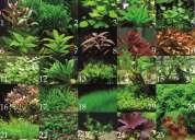 Plantas acuaticas para acuario y estanques
