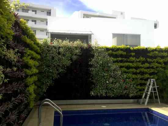 Fotos de azoteas y muros verdes naturales y artificiales for Muros verdes naturales