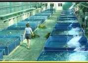 Oxigeno para piscicolas,oxigeno para acuicultura,oxigeno para peces,oxigeno para pisicultura