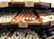 Loros bebé y huevos de loro para la venta.