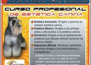 Curso de estÉtica canina profesional *cannis*