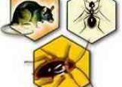 Fumigaciones plagas cucarachas 100% garantizada