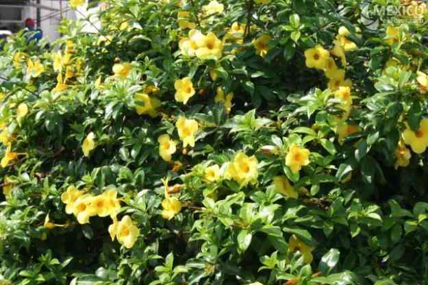 plantas de ornato y jardineria acapulco de ju rez