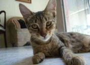 Regalamos gatitos  de un mes , damos en adopcion hermosos gatitos!!