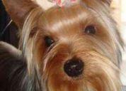 Estética canina profesional grooming dog, servicio a domicilio