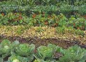 Te gustaría cultivar verduras?