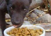 ¿buscas un animalito de compaÑÌa? no compres!! adopta uno!!