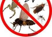 Cucarachas insectos chinches qk...fin a sus plagas pone fin !!!!