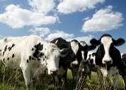 Capacitacion tecnica en productos lacteos