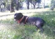 Adiestramiento canino 100% sin maltrato